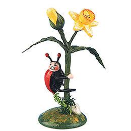 Set of Two -  Ladybug Narcissus  -  5,5cm / 2 inch